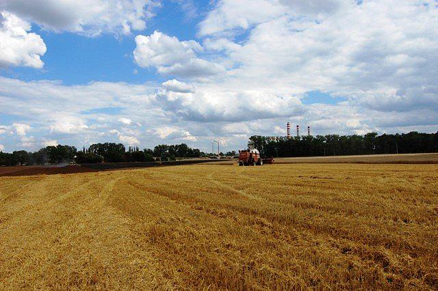 Požár pole s pšenicí u obce Čeperka